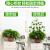 初捨植物緑植固定器緑色のロサンゼルスの家庭用無痕よじ登る藤ツルフックカードのバックルは室内の緑ニンジンのステルス色(中号50個)を挟みます。